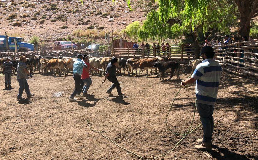 Comunidad de El Torín de Tierra Amarilla mantuvo el rescate de las tradiciones campesinas
