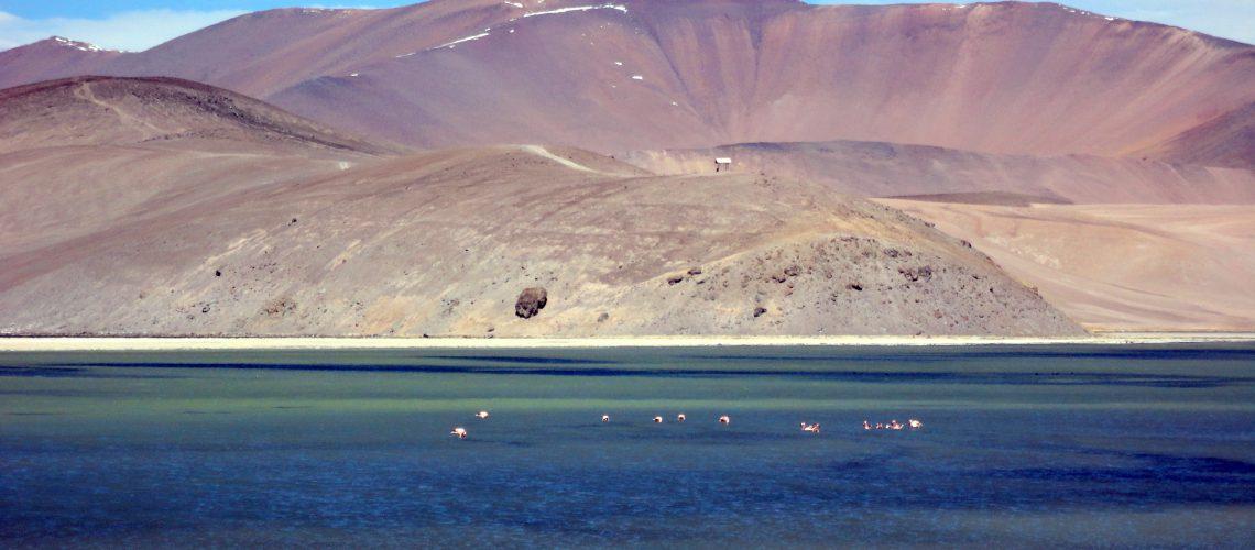 Atacama Laguna del Negro Francisco